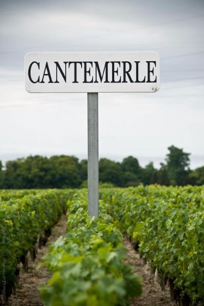 Panneau Château Cantemerle